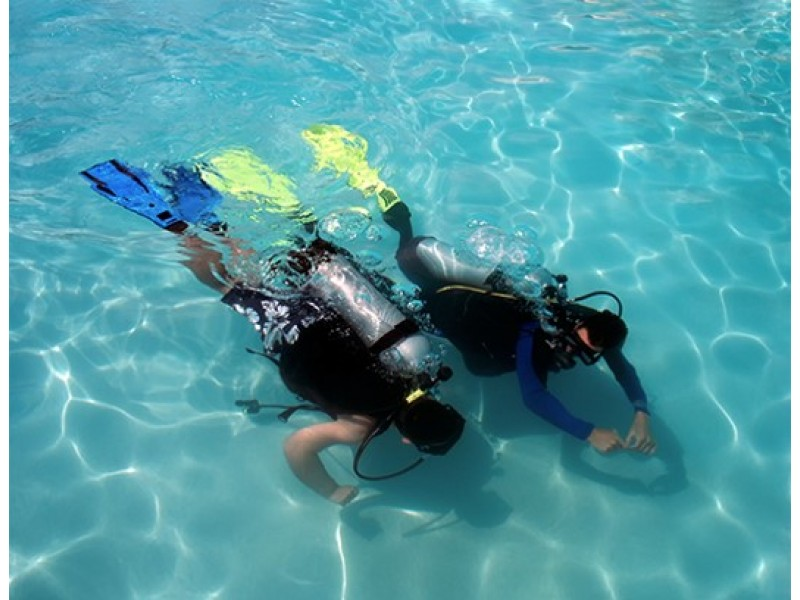 Diving Session with Gill Divers